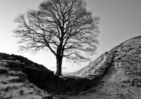 Snowy Sycamore gap photo